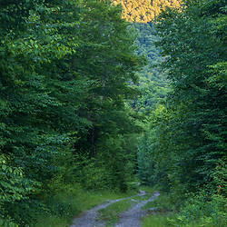 A woods road on Big Spruce Mountain in Arlington, Vermont.Vermont.