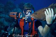 diverand Nassau grouper,<br /> Epinephelus striatus, Rum Cay, Bahamas,<br /> ( Western Atlantic Ocean )