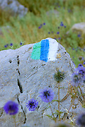 The blue, white and green Israel National Trail marking. A hiking path that extends approximately 960 KM from North to South of the country passing through major sites and natural phenomena. Photographed in the Golan Heights, Israel.