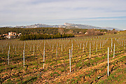 Vineyard and mountain Château Barbanau and Clos Val-Bruyere Cassis Cote d'Azur Var France