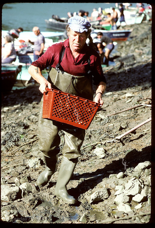 Man carries clam basket along shore of Auray River at Le Bono to be weighed by inspectors. France
