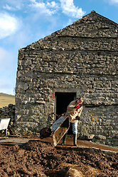 Farmer mucking out cow shed on farm Ribblesdale Yorkshire UK