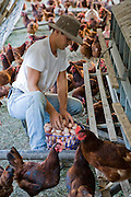 An apprentice picks eggs at farmer Joel Salatin's farm in Virginia's Shenandoah Valley.  (Joel Salatin is featured in the book What I Eat: Around the World in 80 Diets.)