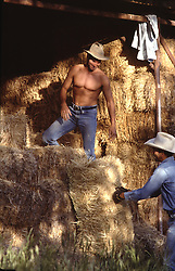 hot cowboys working in a barn filled with hay bales