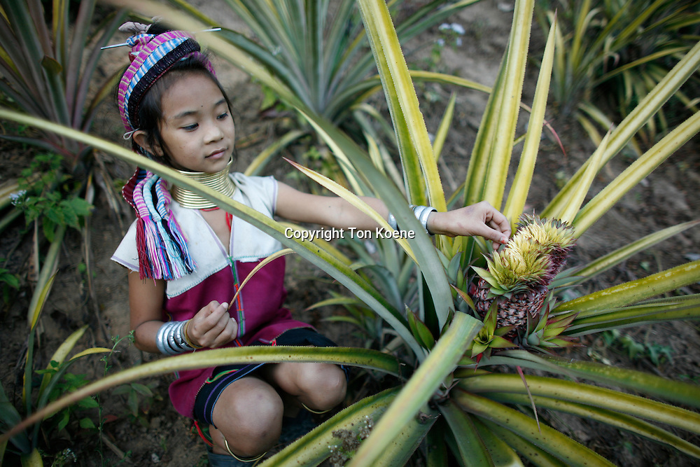 agriculture in Thailand