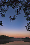 Scots pine (Pinus sylvestris) points its branches over fog covered lake Purezers at dawn, near Puikule, Latvia Ⓒ Davis Ulands   davisulands.com