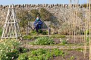 Woman sitting in spring sunshine on bench, Gertrude Jekyll garden on Holy Island, Lindisfarne, Northumberland, England, UK