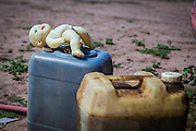 2014/11/22 – Quimili, Argentina: A doll sits on top of containers with gasoline. Children play freely in the Guaycurú Indigenous Community, but sometimes dangerous are closer than you will imagine. (Eduardo Leal)
