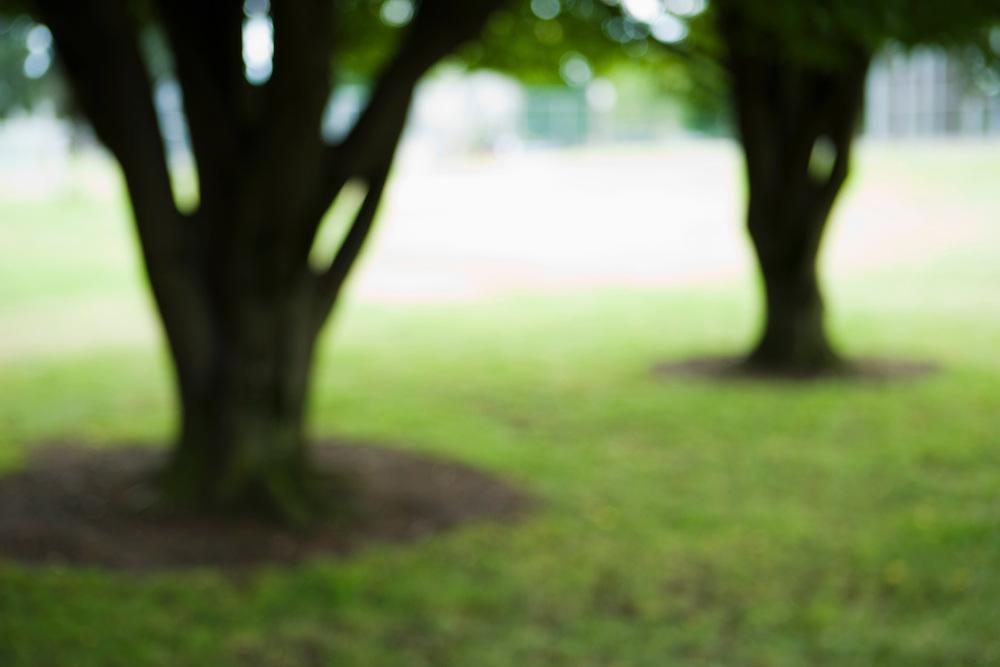 Bluured trees in a park, Portland, Oregon.