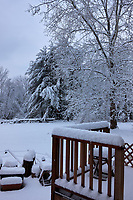 Back Yard View. Image taken with a Leica CL camera and 23 mm f/2 lens (ISO 100, 23 mm, f/3.2, 1/250 sec).