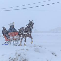 A one horse open sleigh on the road during a snow blizzard.