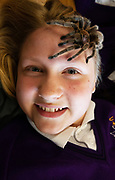 12/11/2018 Repro free: Galway Science and Technology Festival, the largest science event in Ireland, runs from 11-25 November featuring exciting talks, workshops and special events. Full programme at GalwayScience.ie. Braving a tarantula Wiktoria Szejna from Our  Lady's College Galway. Photo:Andrew Downes, Xposure.