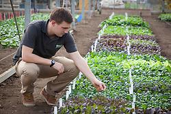 Edward Hale with the salad leaf trials at CN Seeds