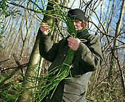 Woodland worker Angela Cole (from Yorkshire Hurdles) collecting materials from a woodland in the Howardian Hills AONB. The Howardian Hills AONB is a landscape with well-wooded rolling countryside, patchwork of arable and pasture fields, scenic villages and historic country houses with classic parkland landscapes.