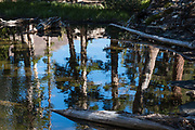 Tree reflections in a pond by East Lake in Hoover Wilderness of Humboldt-Toiyabe National Forest, Eastern Sierra Nevada, Mono County, California, USA.