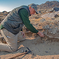 Archaeologist Robert Bettinger points out a layer of volcanic ash that was laid down by a nearby volcano, 750 years ago, helping to date artifcacts that are above or below it.