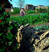 Scarecrow and cottage vegetable garden, Marshfield, Wiltshire, England
