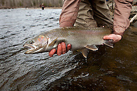 Angler displays a fly caught steelhead from the Salmon River in upstate New York