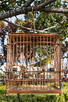 Chinese birdcage hanging outdoors on a tree branch in gucheng park Shanghai republic popular of China