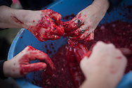 Some women make blood sausages in traditional way pig slaughtering. Legasa (Basque Country). January 7, 2017. The slaughter traditionally takes place in the autumn and early winter and the work often is done in the open. (Gari Garaialde / Bostok Photo)