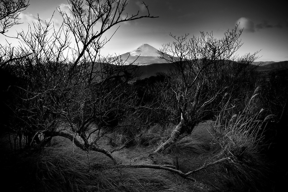 HAKONE, JAPAN - The mount Fuji with some trees in the front. le mont Fuji avec un premier plan d'arbres denudes.