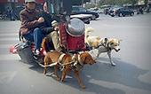 Old Couple Ride Dog-drawn Cart