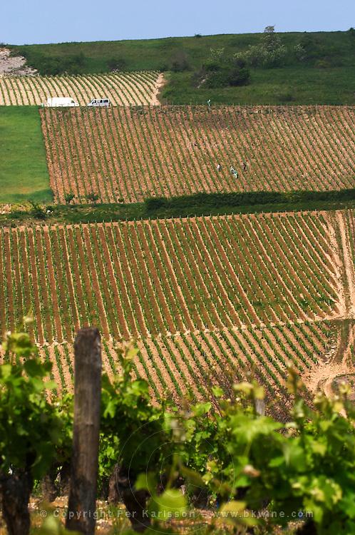 Vineyard. Monts Damnes. Domaine Henri Bourgeois, Chavignol, Sancerre, Loire, France