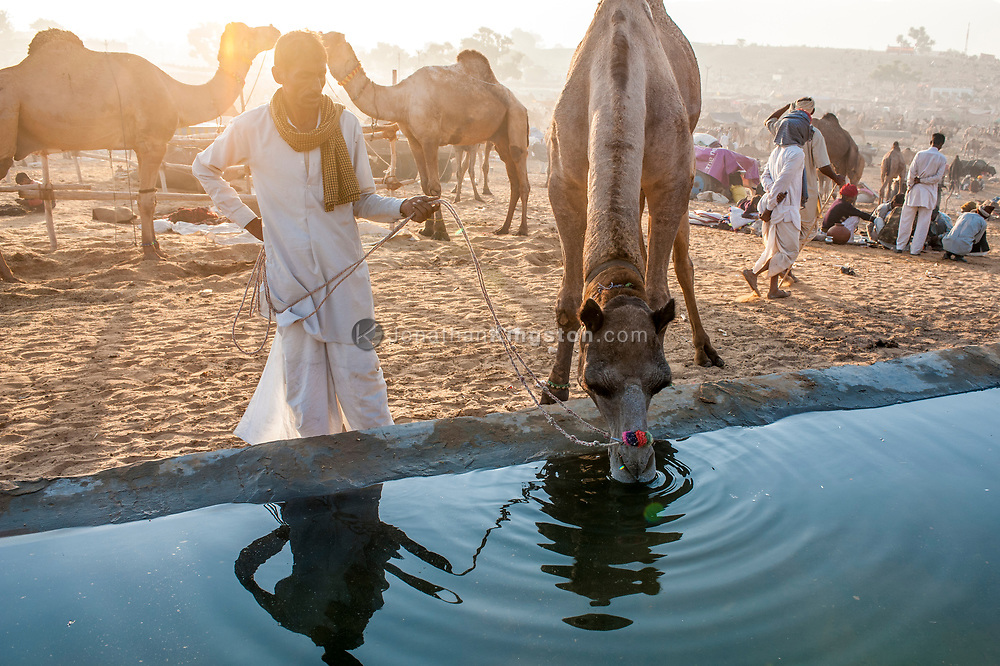 A desert nomad waters his camel at a cistern in the desert in India.