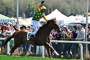 27 March 2010 : Jorge Torres pumps his fist after winning the training flat race aboard Prince Rahy for Jonathan Sheppard.