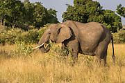 Kenya Wildlife Gallery