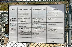 Animal Chart, Marine Mammal Rescue