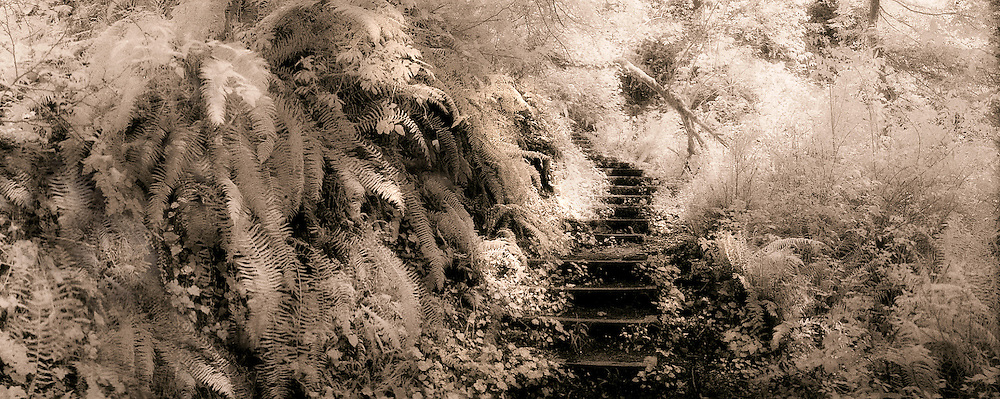 Winding stairway through ferns in Fern Creek, Prairie Creek Redwoods State Park, Redwood National Park, California