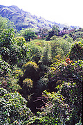 Tropical landscape rainforest in Blue Mountains, Jamaica, West Indies, 1990