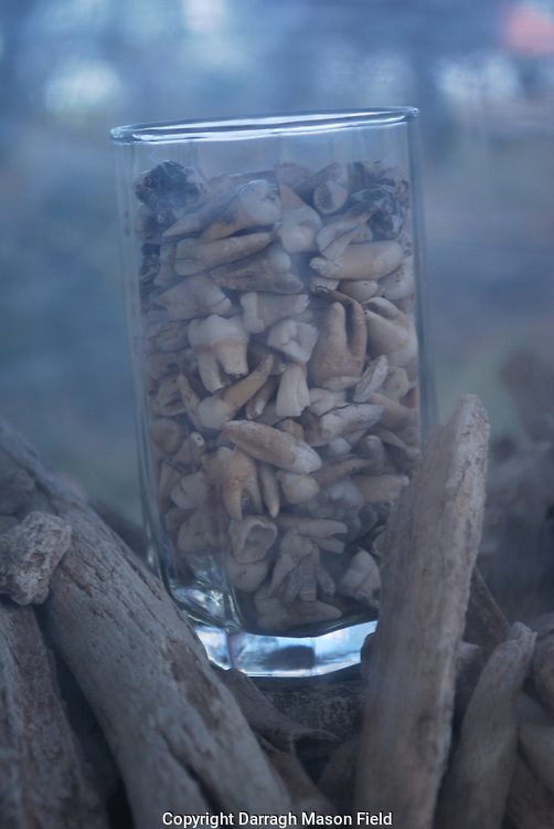 A glass of human teeth, found in the mass graves of the killing fields