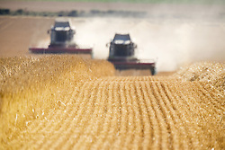 July 21, 2019 - Combines Harvesting Field, North Yorkshire, England (Credit Image: © John Short/Design Pics via ZUMA Wire)
