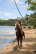 Island of Taveuni, Fiji, Melanesia, South Pacific