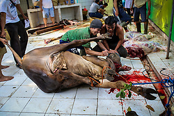 September 1, 2017 - Jakarta, Indonesia - September 1, 2017 - Jakarta, Indonesia -.Indonesian Muslims slaughter a cow during Muslim holiday of Eid Al-Adha at Jakarta. (Credit Image: © Garry Andrew Lotulung via ZUMA Wire)