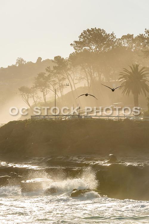 La Jolla Cove Coastline of San Diego California
