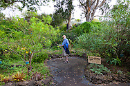 The Kula Botanical Garden, Maui, Hawaii