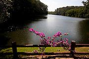 Vitoria_ES, Brasil...Parque Botanico da Companhia Vale do Rio Doce (CRVD), em Vitoria...The Botanic Park of Vale do Rio Doce (CRVD) company, in Vitoria...Foto: LEO DRUMOND /  NITRO