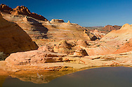 Seasonal pool of water at The Wave, Coyote Buttes, Paria Canyon Vermilion Cliffs Wilderness, Arizona