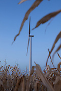 New wind generators stand ready. The new rural economy blends with the traditional, both renewable energy sources.