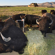 Heritage Ranch Exteriors with Bison