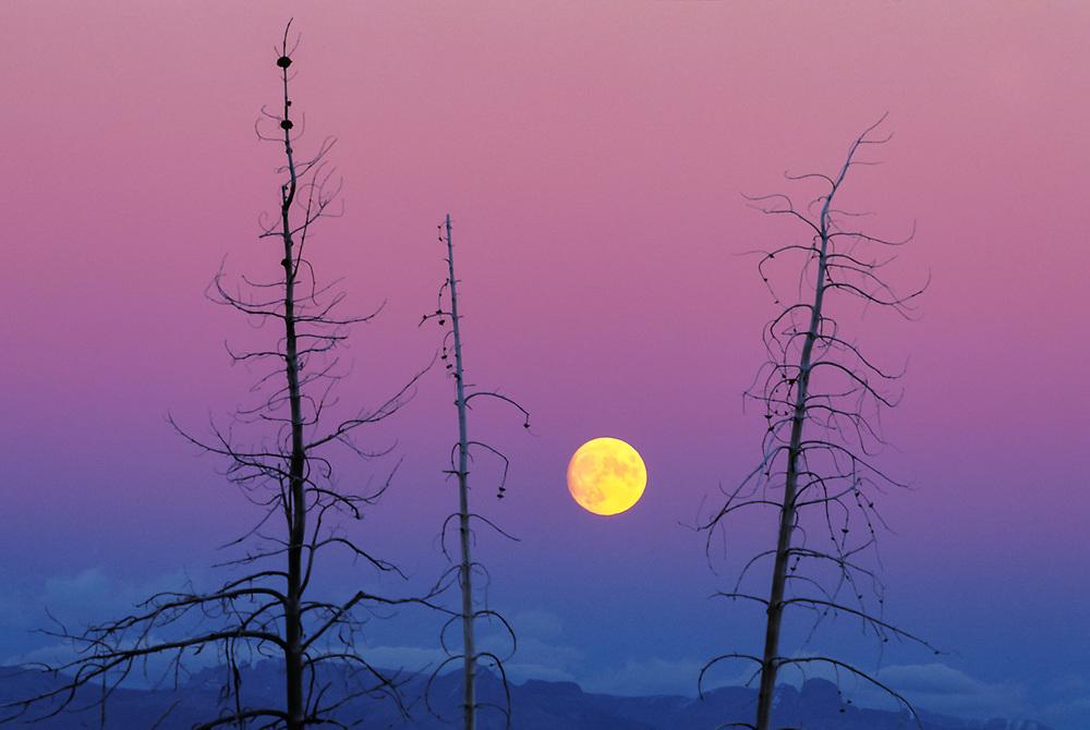 Moonrise near Jackson Lake, autumn, Yellowstone National Park, Wyoming, USA