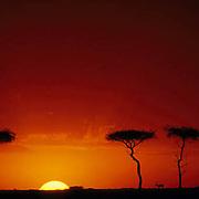 Kenya, Africa. Sunset on the Masai Mara Game Reserve. Thomson's Gazelle silhouetted against horizon.