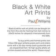 Black & White Art Prints
