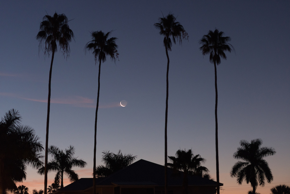 The sliver of a waxing moon sets between palms trees in Everglades City, Floria