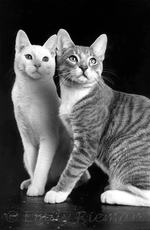 Portrait of cats shot on black and white film.