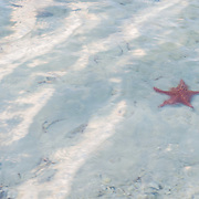 Starfish. Kaibo Beach. Rendezvous point for the Stingray City tour. Rum Point. Grand Cayman Island.