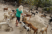 Terryl Just is met by a group of  dogs as she enters the Yangon Animal Shelter.